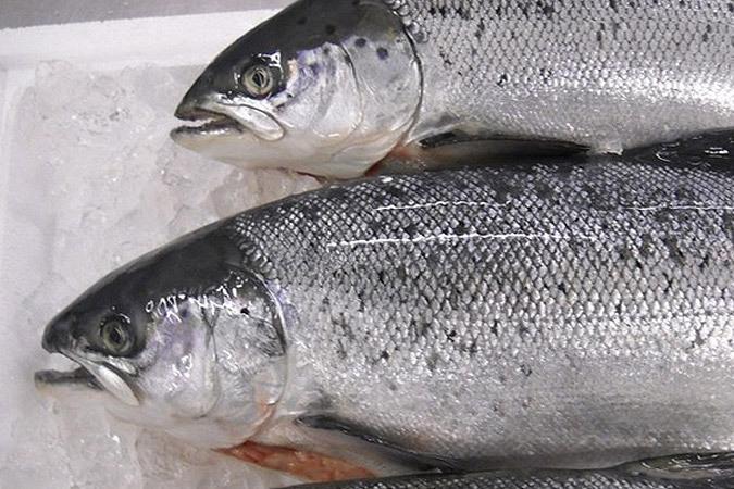 Сколько и какой рыбы потеряет Россия после 7 августа 2014 года