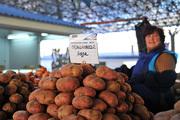 Выбираем картофель: для варки, жарки и хранения