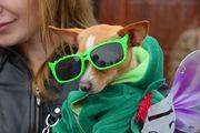 Костюмированные собаки помогли собрать сто тысяч рублей