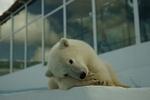 В геленджикском Сафари-парке удочерили медвежонка-сироту