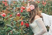 Розы в шалашиках: правила укрытия в зиму