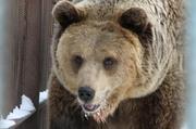 Мужчина отбился от медведя с помощью системного блока компьютера