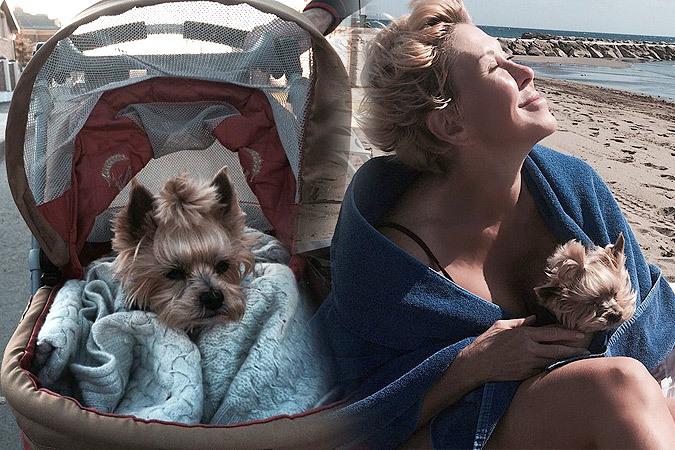 Любовь Успенская выгуливает в детской коляске...собаку!