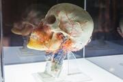 «Трилогия о здоровье: тело, дух, эстетика»