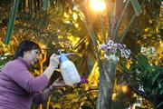 В «Аптекарском огороде» разрешат кормить хищные растения