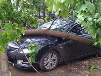 Ураган в Москве: повалены 1300 деревьев, разбиты десятки машин