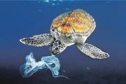 В Москву приплыла «Золотая черепаха»
