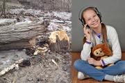 В Саратове тополь высотой с пятиэтажку рухнул на 13-летнюю школьницу