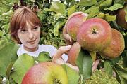 Уставший дачник от яблони недалеко падает