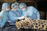 Врачи спасли годовалого котенка, покалечившего лапу в капкане