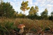 Наркодельцы расстреляли из дробовиков грибников, которые набрели на конопляное поле