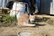 Мужчина, пытаясь убить кошку, застрелил своего родственника