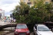 В центре Новосибирска поперек проезжей части упало дерево