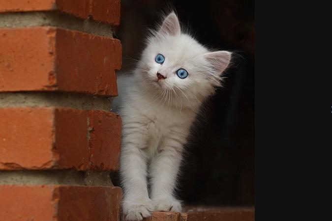 На Ставрополье котенок спас своего от пожара.