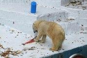 Любимице новосибирцев медведице Шилке исполнилось два года: в японском зоопарке её накормили тортом из лосося
