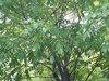 садовые деревья/кустарники