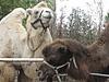 Частный зоопарк в Малышево