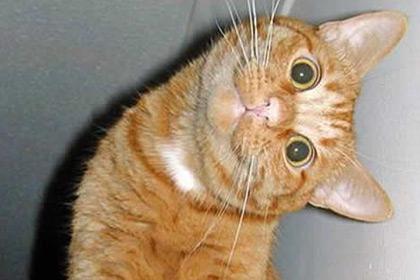 Хит-парад мартовских котов
