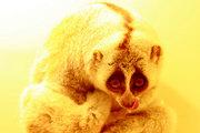 Ульяновцы могут полюбоваться на экзотических животных