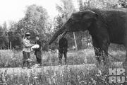 1914 год. Царское село. Николай Второй вместе с наследником и боцманом Деревенько ведут слона купаться.
