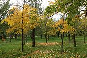 От прежнего парка здесь остались только красивые деревья