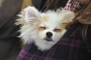 В Сокольниках прошла Всероссийская выставка собак