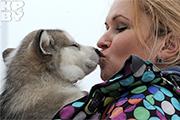Гонка на собачьих упряжках «Завiруха - 2014»