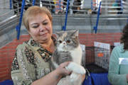 В Ижевске прошла выставка редких пород кошек