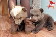 Весна в уфимском вольере: медведи проснулись и показали маленьких косолапых