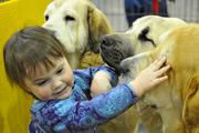 В Москве прошла выставка собак «Евразия-2014»