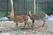Весна в пермском зоопарке