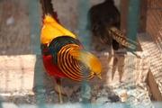 Весна в зоопарке на Садгороде
