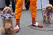 Карнавальным шествием открылся форум уличных театров