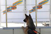 На полигоне МЧС в подмосковном Ногинске прошли масштабные учения спасателей