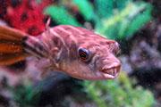 В Иркутске открылась выставка рыб