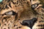 В Волгоград приехал передвижной зоопарк «Сафари»