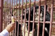 Питомцы Барнаульского зоопарка в летнюю жару (2014 год)