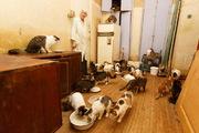 33 кошки в одной квартире