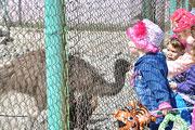 День рождения Барнаульского зоопарка (август 2014 года)