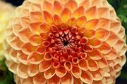 В Иркутске открылась выставка цветов