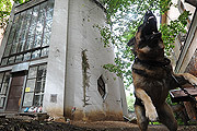 Фоторепортаж из Дома Мельникова - знаменитого сооружения эпохи советского авангарда