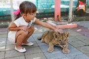 Маленькая львица появилась в зоопарке Ставрополя
