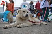 В Новосибирске прошел собачий карнавал
