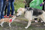 Выставка беспородных собак «Кубок Барбоса» - 2014