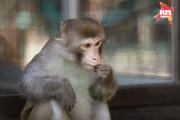 В Ставропольском зоопарке животные получили новые вольеры
