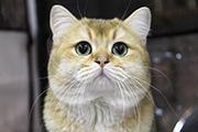Выставка котят в Иркутске