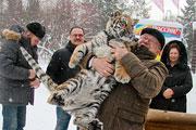 Первый день тигрицы Багиры в Барнаульском зоопарке