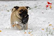 В Ярославле выпал первый снег