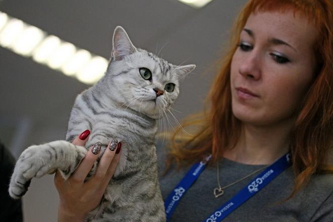 Выставка кошек прошла в пскове