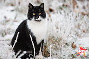 Как ставропольские коты побеждают холода